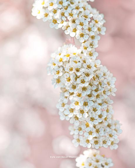 Dreamy little flowers