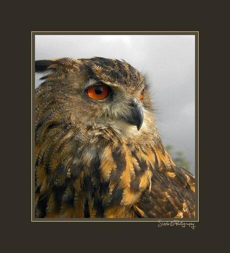 Roofvogelshow Terra Maris 6