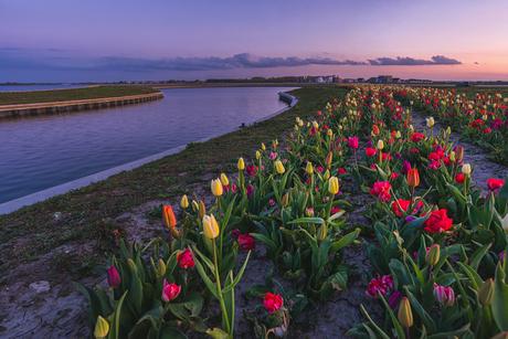 Het Tulp eiland staat nu mooi in bloei. Geniet ervan op afstand van elkaar. Groetjes van mij.