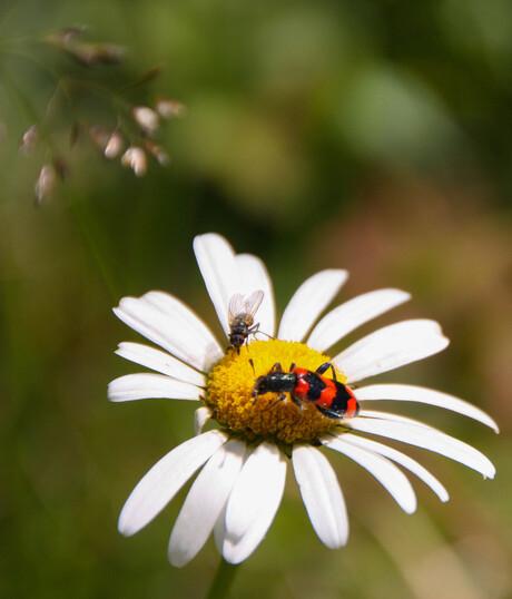 Insecten, Zwitserland