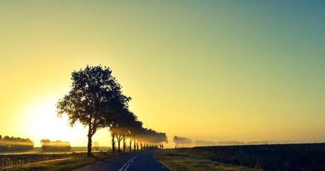 Foggy north