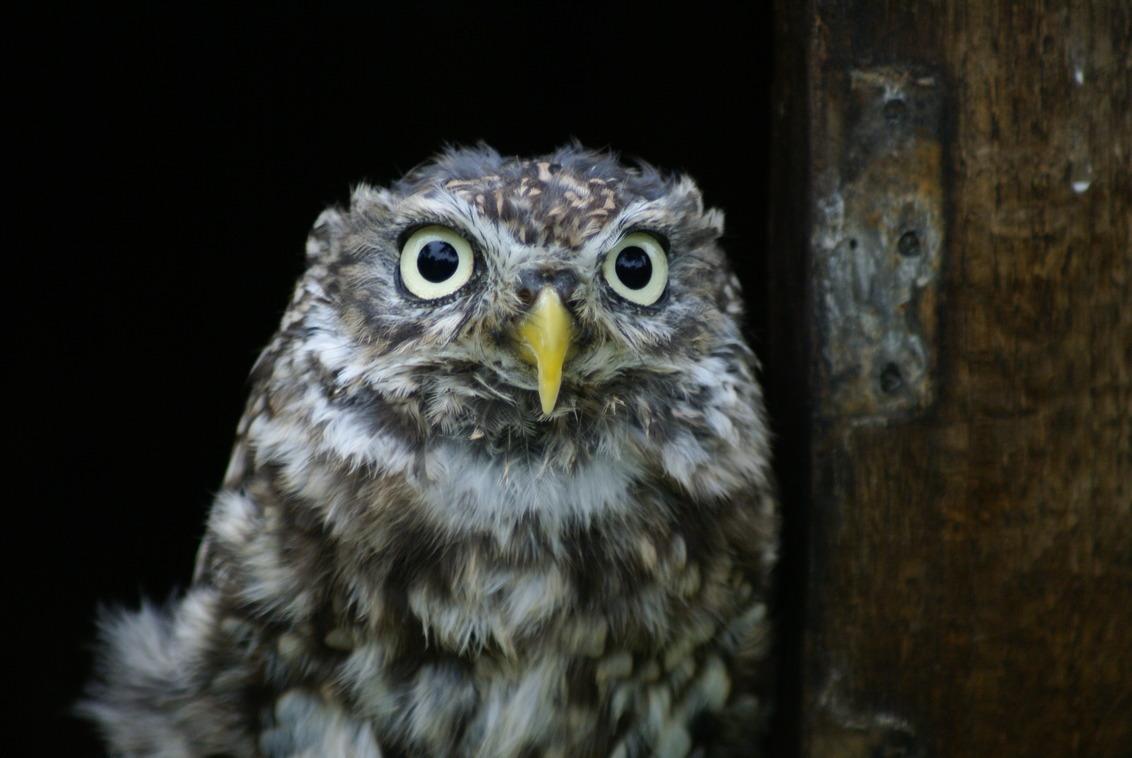 Kleintje - - - foto door MarijeScheening op 22-06-2017 - deze foto bevat: uil, natuur, dieren, vogel