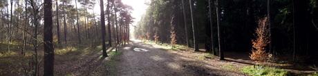 Hoe mooi kan het bos zijn