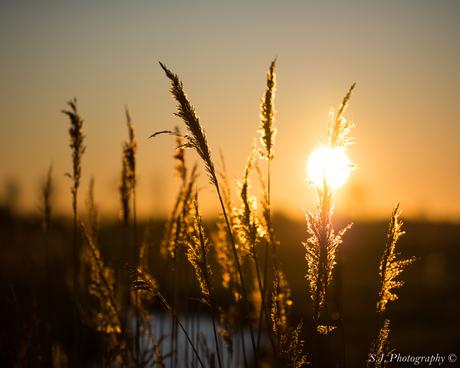 Zonnige zonsondergang