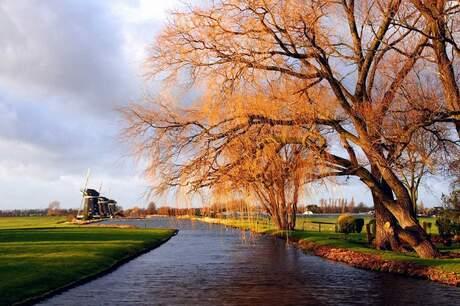 Gele bomen