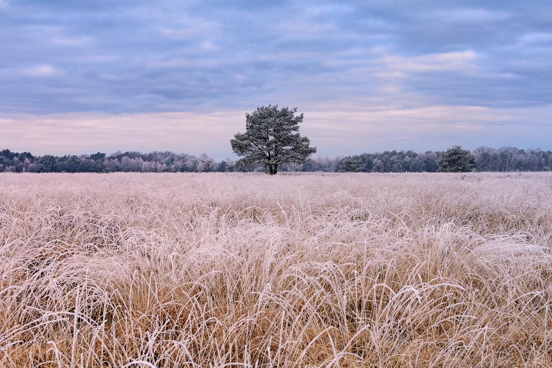 Heideveld met boom - Een frisse ochtend op een heideveld bij Speuld. (07-03-2021) - foto door henrivanarkel op 07-03-2021 - deze foto bevat: lucht, wolken, licht, ochtend, rijp, heide, heideveld
