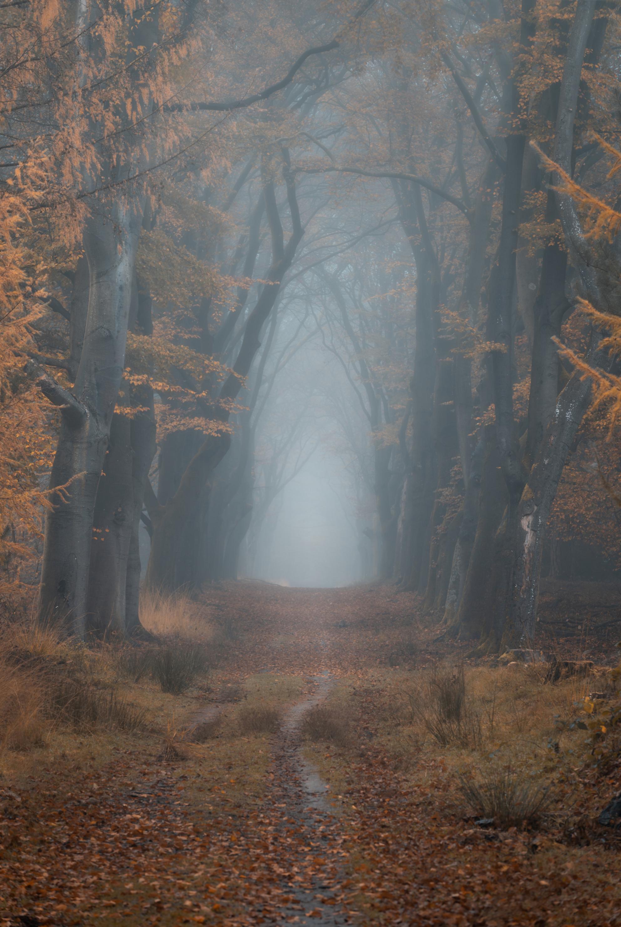 Misty Lane 3 - - - foto door renevierhuis op 26-11-2020 - deze foto bevat: natuur, licht, herfst, landschap, mist, bos, zonsopkomst, bomen