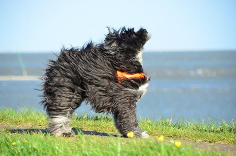 Babzhi in de wind
