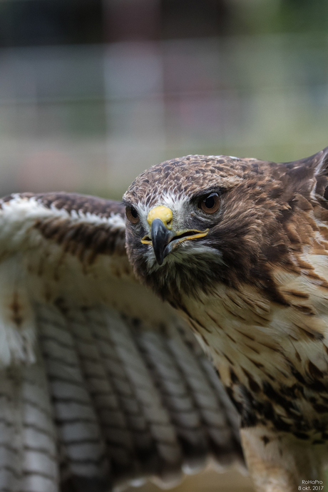 Canon Experience Day - Roofvogels_06