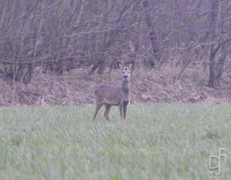 my deere