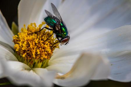 fly on a flower - - - foto door LecomtePriscilla op 31-07-2015 - deze foto bevat: bloem, vlieg