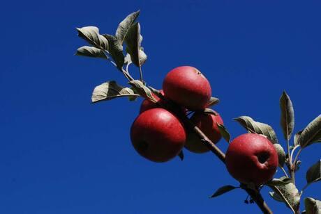 Red Hot Appels
