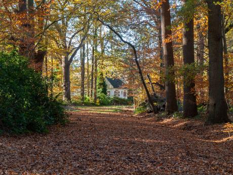 Oude Buissche Heide