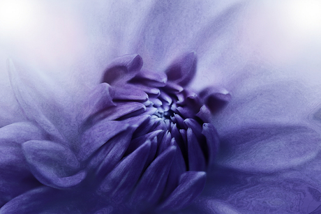 purple fresco