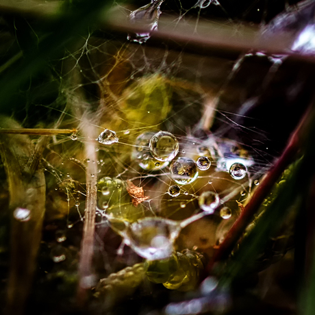 Waterdruppels op een web