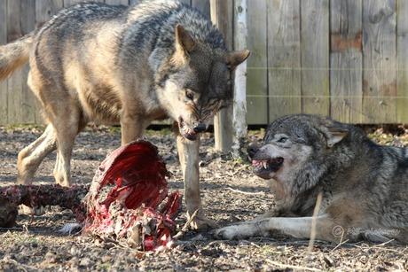 Blijf van mijn eten af!
