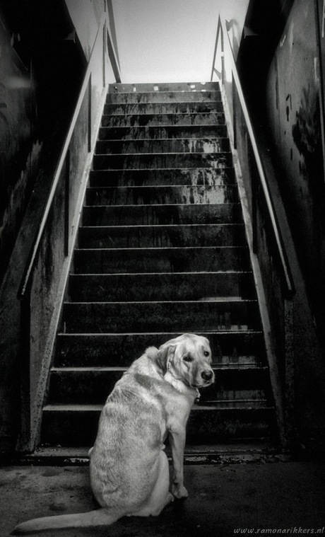 In the stairway