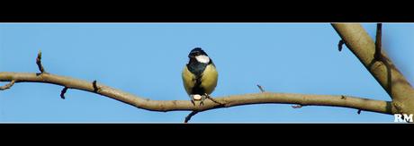 Vogeltje