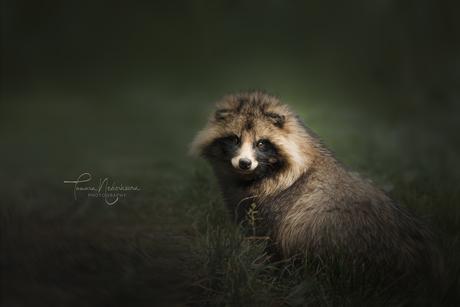 ©TamaraNederkoornPhotography-wasbeerhond