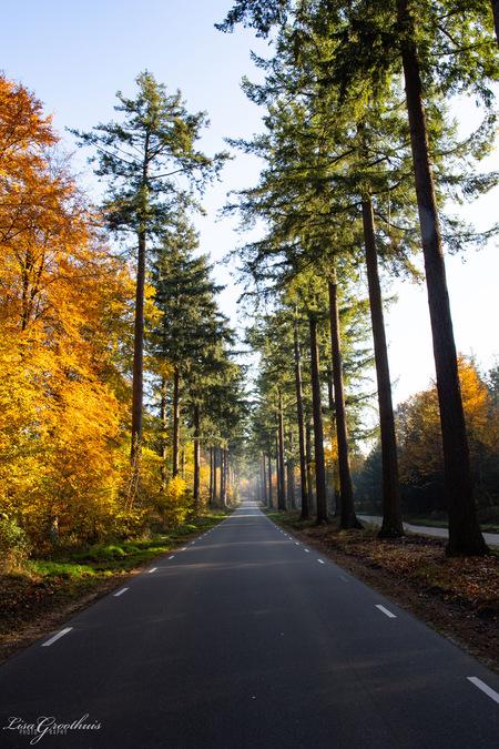Weg - - - foto door LGphotography op 03-12-2020 - deze foto bevat: groen, boom, oranje, herfst, bos, weg, speulderbos