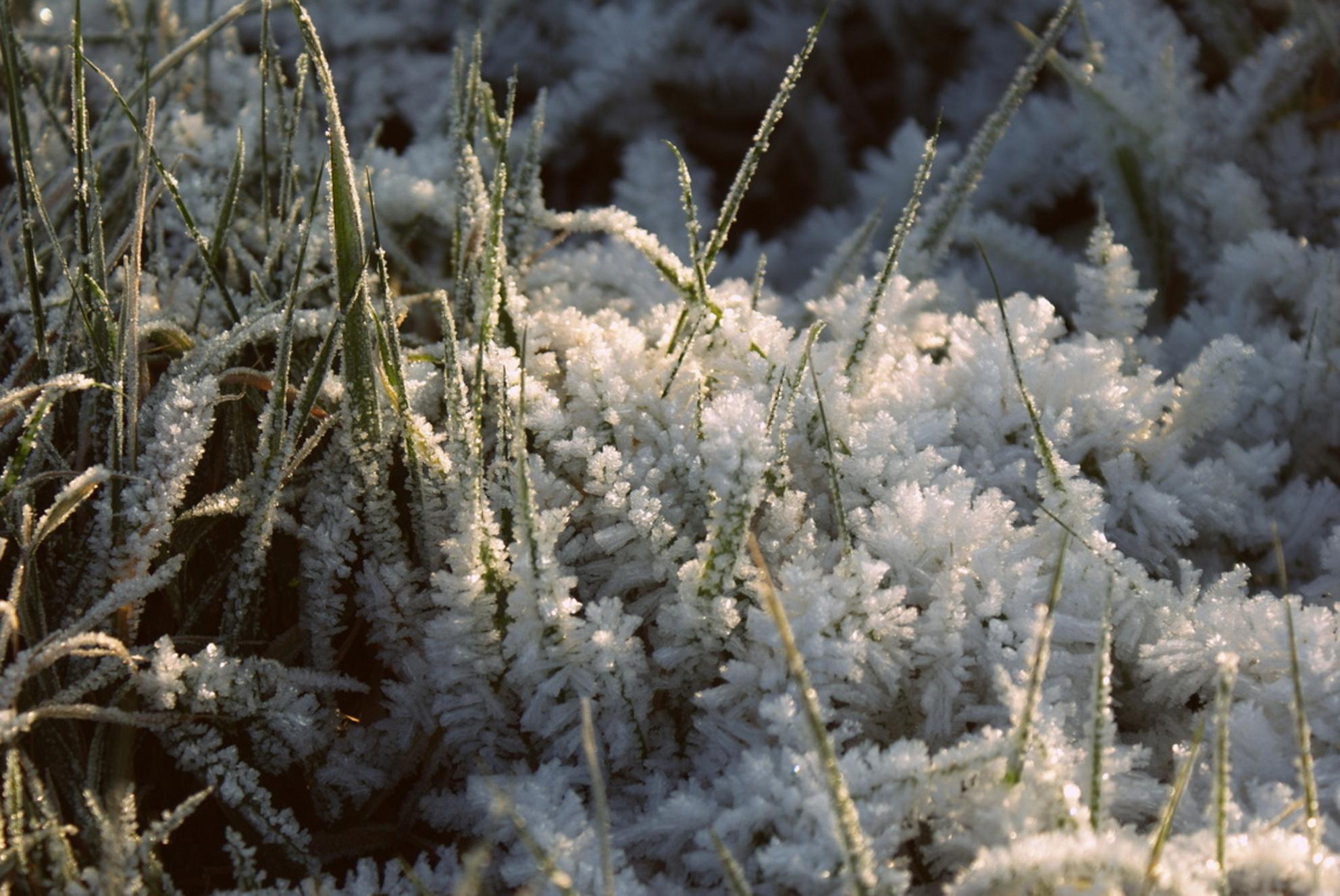 Frozen - Bevroren gras in een weiland - foto door fransreede op 16-10-2012 - deze foto bevat: winter, vorst, kou, weiland