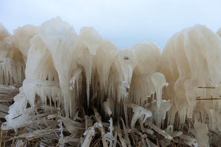Ijssculpturen - 15 februari 2021 Detail van het bevroren riet, heel bijzonder om te zien, en dat nog maar een week geleden.  Fijne dag Groeten Kees - foto door Santakees op 22-02-2021 - deze foto bevat: sneeuw, winter, ijs, riet, lauwersmeer, ijspegel, ijssculpturen, bevroren riet