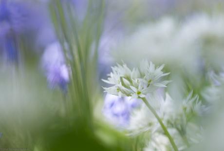 zoomdag botanische tuin utrecht