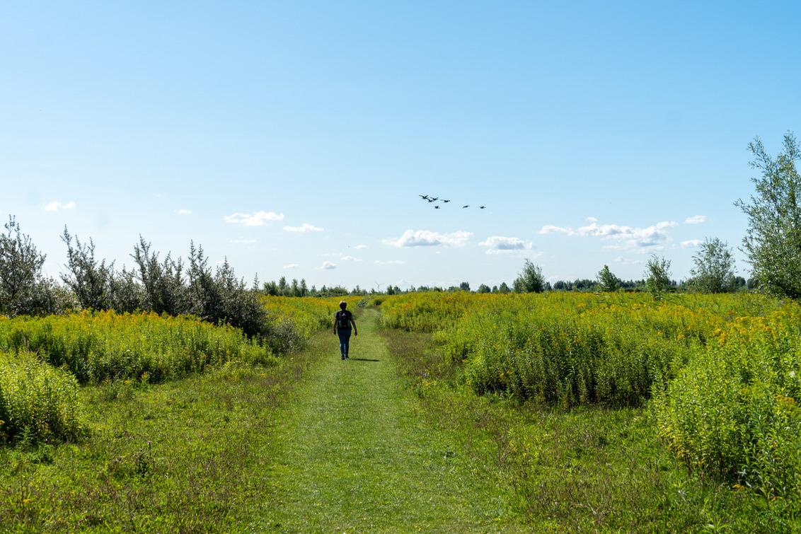 Wandelen in natuurgebied Tiengemeten - Natuurgebied Tiengemeten. Een echt eiland dicht bij Rotterdam. Een eiland vol vogels waar je heerlijk kunt wandelen. Een pont brengt je over het Hari - foto door Daalm op 04-08-2020 - deze foto bevat: lucht, dijk, panorama, natuur, licht, landschap, bomen, natuurmonumenten, polder, pont, natuurpark, tiengemeten