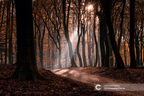 Een beetje magie in het bos