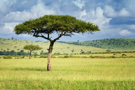 Umbrella's in the Mara