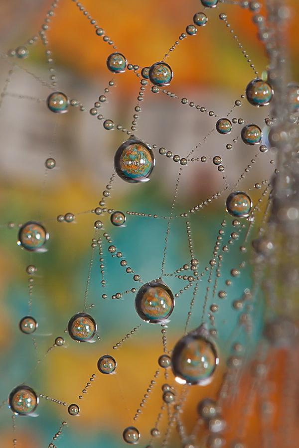 Europa aan een zijden draad - In de achtertuin aan het rommelen geweest met een spinneweb en een wereldbolletje, met dank aan de mist. - foto door GertJan13 op 20-11-2011 - deze foto bevat: mist, spinneweb, dauw, europa, wereldbol