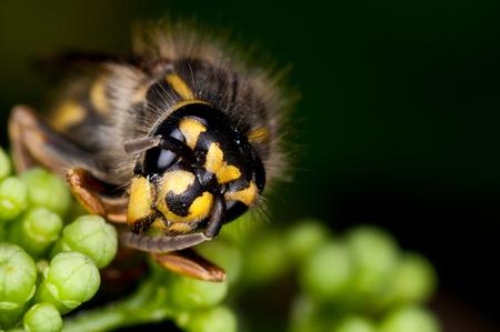 Wesp - wesp - foto door Tammy op 30-04-2012 - deze foto bevat: macro, wesp, natuur, geel, zwart, vliegen, insect, beest