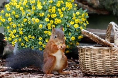 Eekhoorntje in mijn tuin