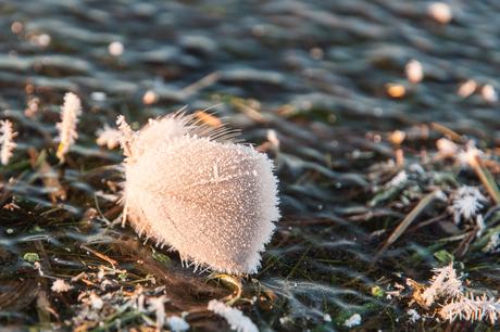 een ijzig ganzenveertje