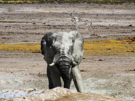 olifant gooit modder