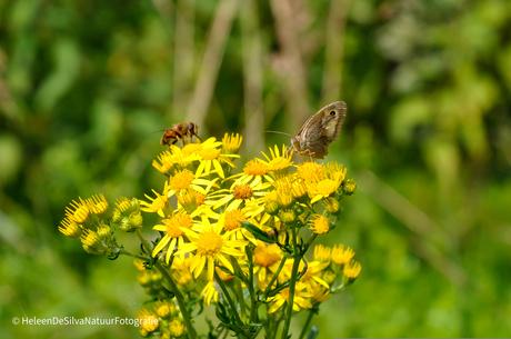 Vlinder meets Bij