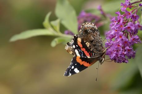 Hoera, een vlinder!
