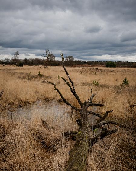 Kampina Boxtel - Voorjaarswandeling natuurgebied Kampina. - foto door j_van_mil op 11-04-2021 - deze foto bevat: wolk, lucht, fabriek, natuurlijk landschap, hout, boom, takje, gewoon, grasland, gras