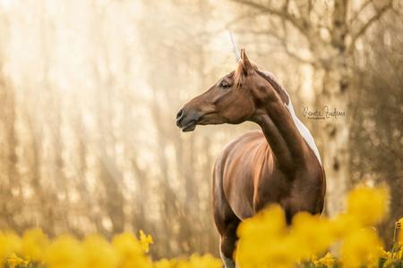 Sunset unicorn - Pony pepper in het avondzonnetje tussen de narcissen. - foto door RenateZuidemaFotografie op 16-04-2021 - deze foto bevat: pony, paard, eenhoorn, zonsondergang, zon, narcis, narcissen, lente, bloemen, paardenfotografie, fabriek, paard, ecoregio, natuurlijk landschap, geel, boom, gras, hout, fawn, terrestrische dieren