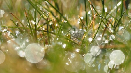 Hagel in april... - April doet wat hij wil... Met macrolens geprobeerd te spelen met het licht, korrels en waterdruppen.. - foto door bernadette-willemsen op 08-04-2021 - locatie: Duiven, Nederland - deze foto bevat: weersomstandigheden., water, hagel, licht, gazon, vloeistof, terrestrische plant, takje, water, natuurlijk materiaal, gras, vochtigheid, dauw, detailopname, patroon