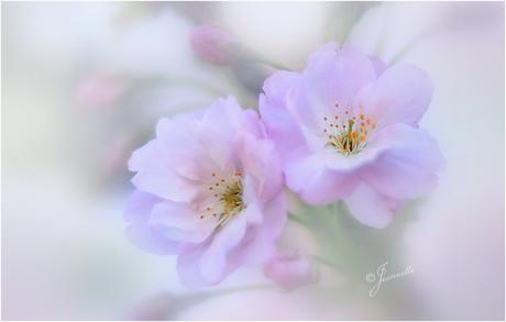 Een bloemetje voor de Pinksterdagen.