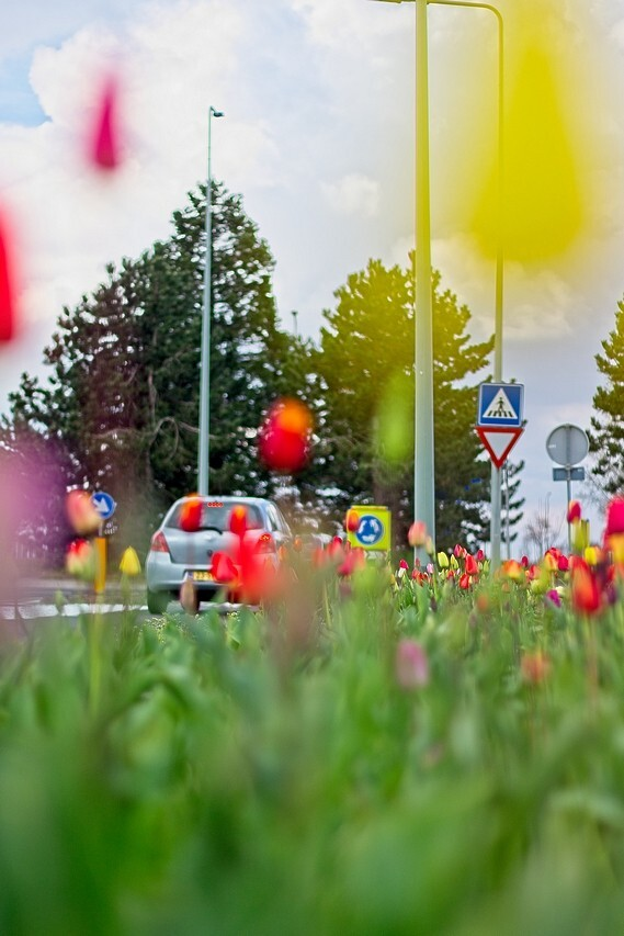 Tulpen langs de weg - Je hoeft niet perse naar de bollenvelden om foto's van tulpenvelden te maken. - foto door cockie op 15-04-2021 - locatie: Hoensbroek, Nederland - deze foto bevat: tulp, tulpen, bloem, voorjaar, voorjaarsbloem, kleur, perspectief, standpunt, auto, weg, wiel, fabriek, auto, band, lucht, natuur, blad, bloem, speelgoed, verlichting