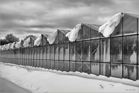 Sneeuw + Wind.