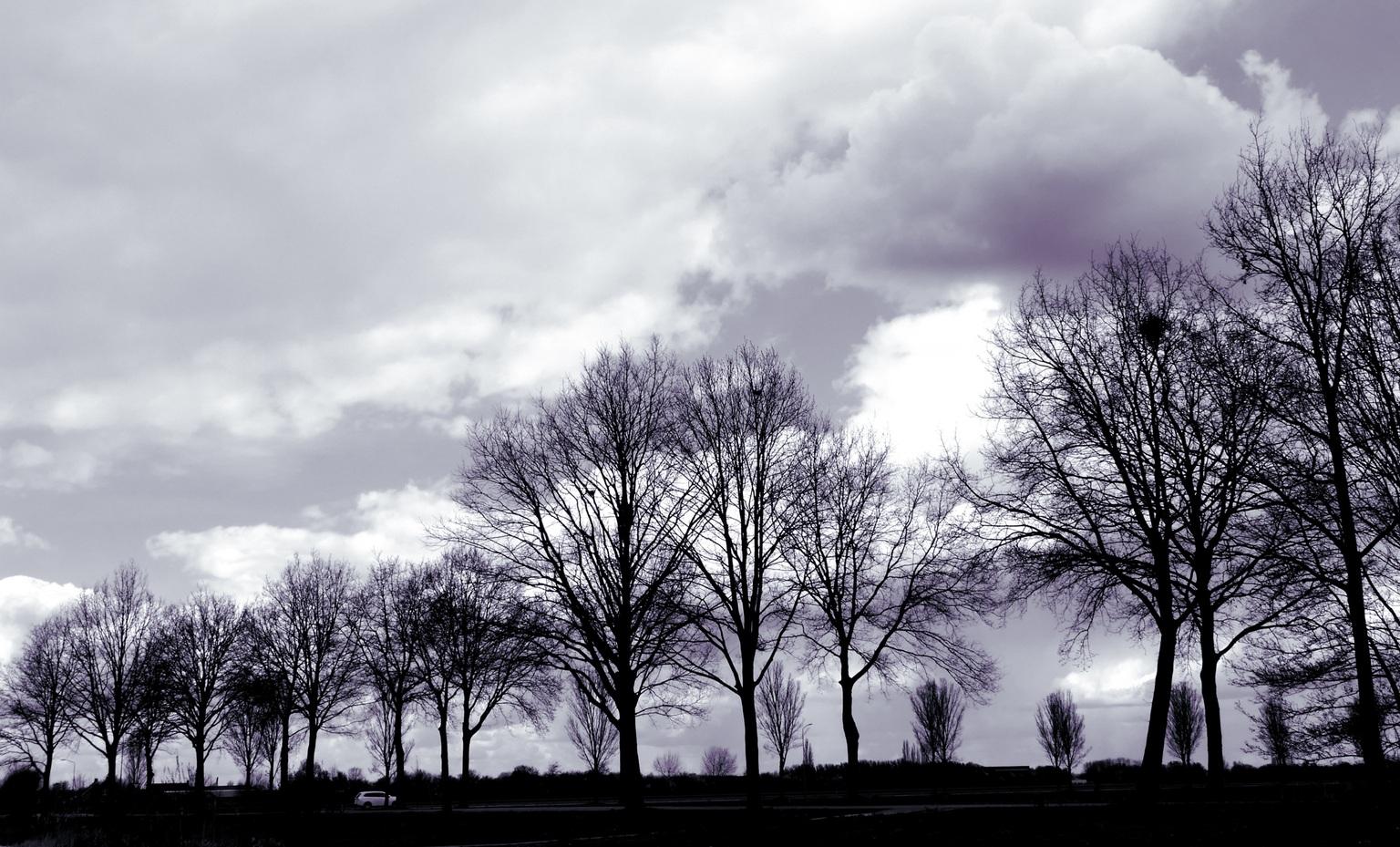 Moody - Rondje om huis  - foto door Ingridpronk op 14-04-2021 - locatie: Oss, Nederland - deze foto bevat: wolk, lucht, atmosfeer, fabriek, natuur, boom, zwart, afdeling, natuurlijk landschap, grijs