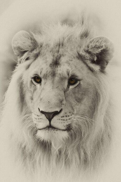 Close up leeuw bewerkt
