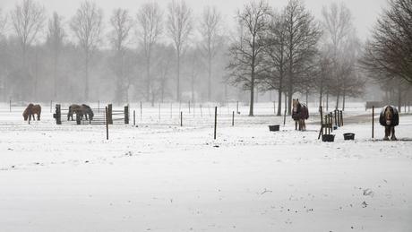 Winter landschap 1
