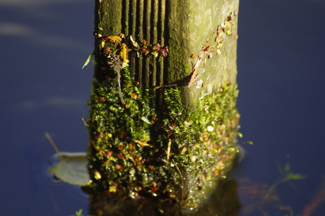 Mossen en plantjes