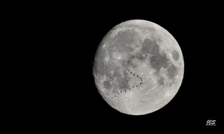 Maan - vogels