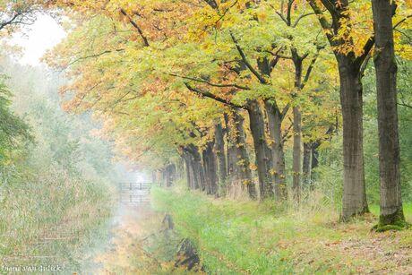mooie ochtend in de herfst
