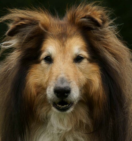 Fotoshoot hond